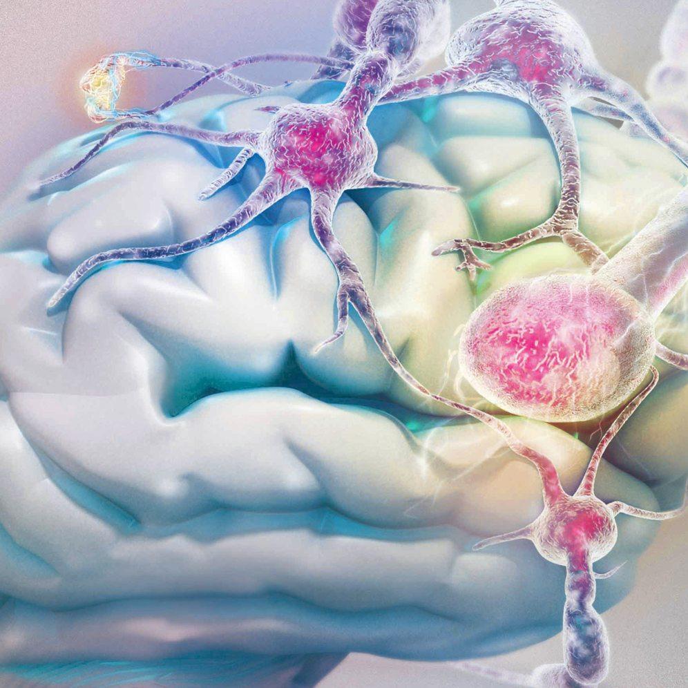 neurociencia modelado 3D