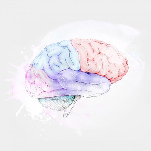 cerebro curriculum vitae giselle vitali