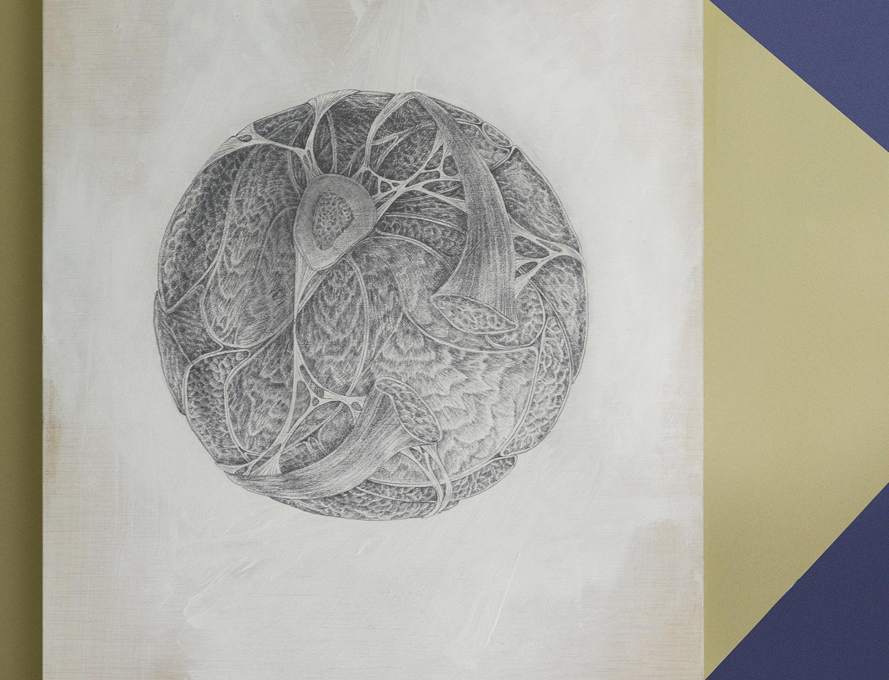 esfera obra de arte hecha con lapiz de grafito por giselle vitali