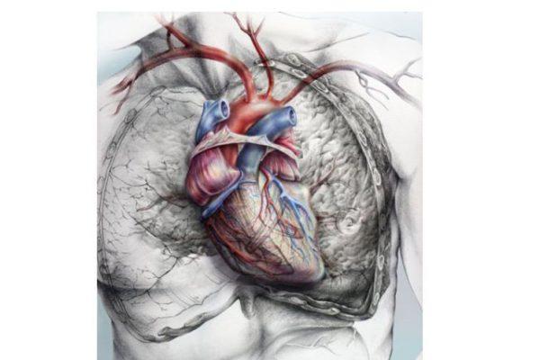 giselle_vitali_andimmortalitymedicine